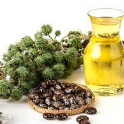 caster-oil
